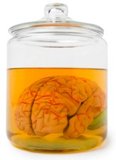 a brain in a jar